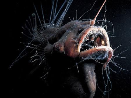 Anglerfish-deep-sea-fish[1].jpg